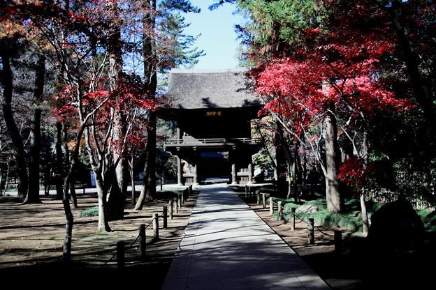 総門よりの山門の紅葉