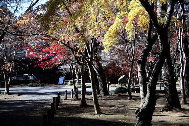 平林寺の紅葉2
