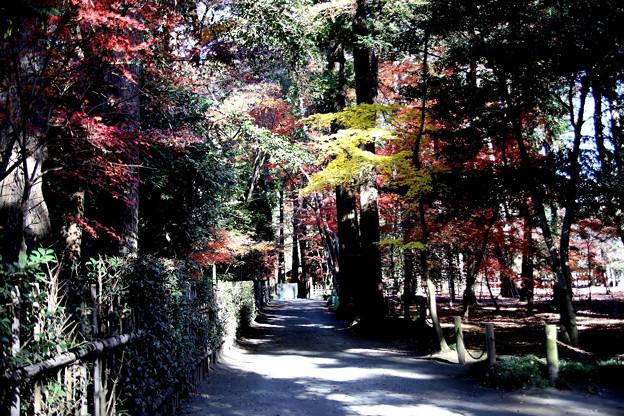 平林寺境内の紅葉