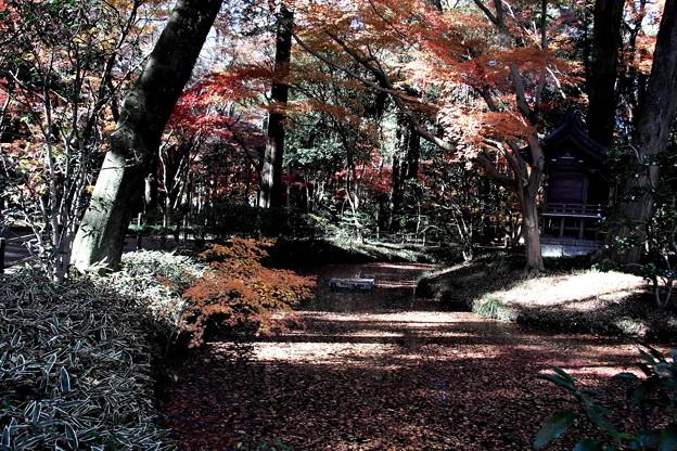 平林寺の秋の散策道