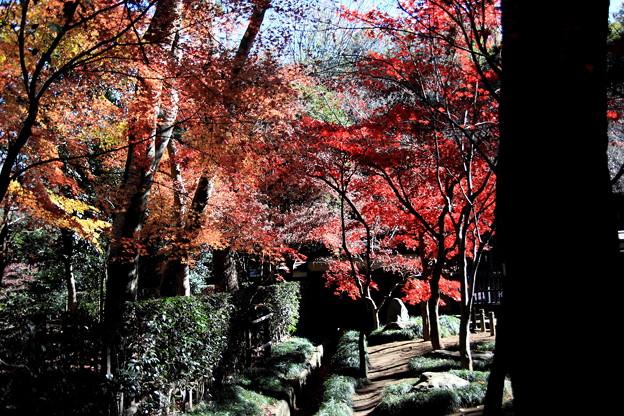 平林寺の紅葉3