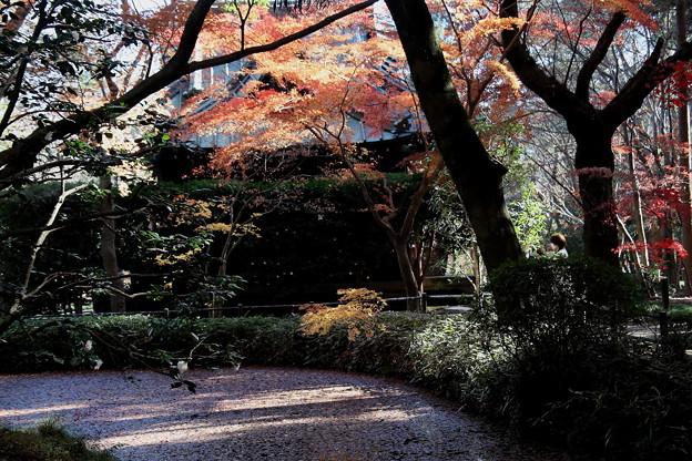 経堂と放生池との紅葉