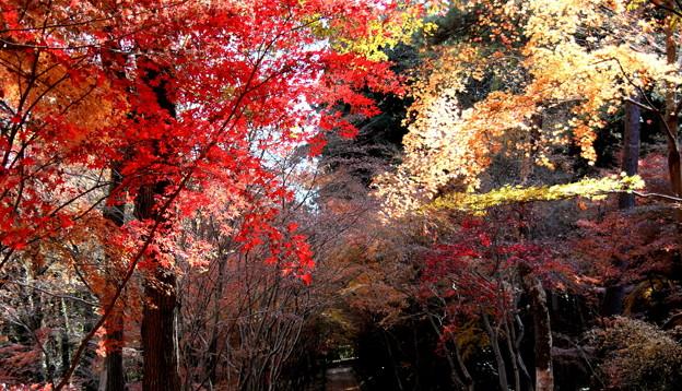 秋謳歌 平林寺