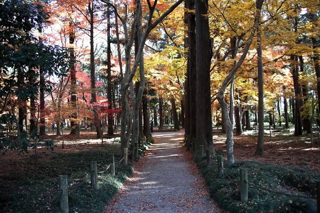 紅葉への参道