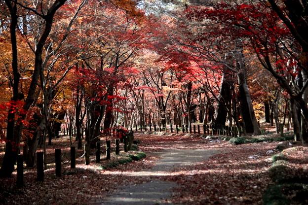 平林寺のモミジ林の紅葉