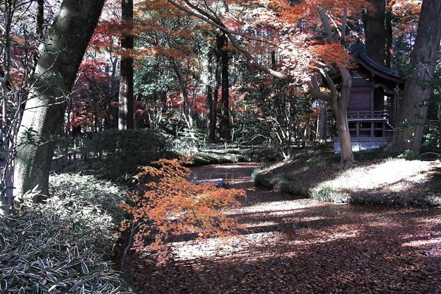 紅葉の参道  平林寺