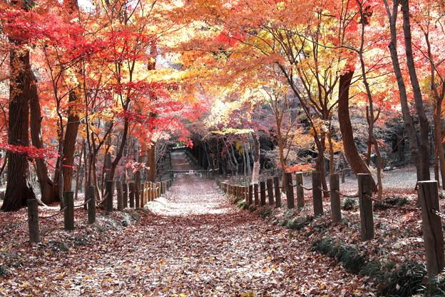 平林寺の紅葉  絶景の紅葉