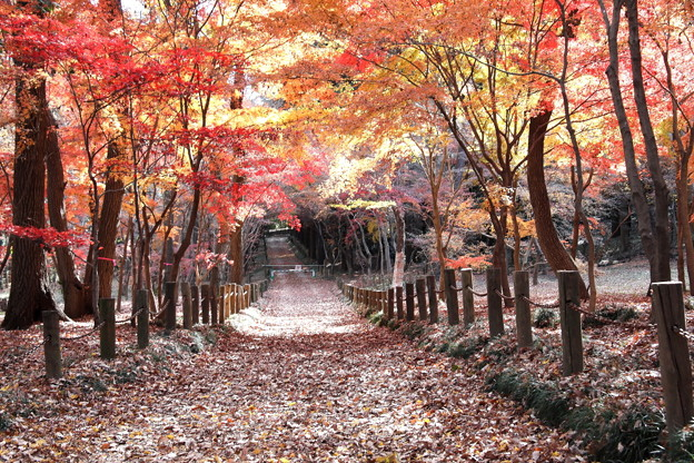 Photos: 平林寺の紅葉  絶景の紅葉