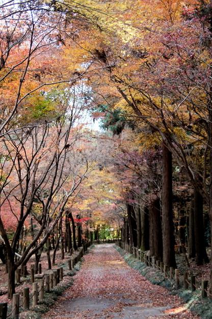 紅葉する平林寺風景