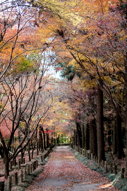 Photos: 紅葉する平林寺風景