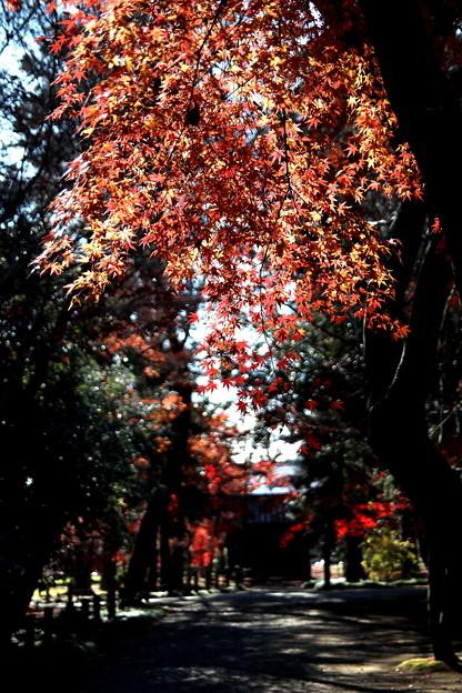 旧半僧門の紅葉1 平林寺