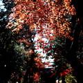 Photos: 旧半僧門の紅葉1 平林寺