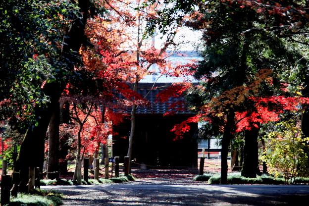 旧半僧門の紅葉平林寺2