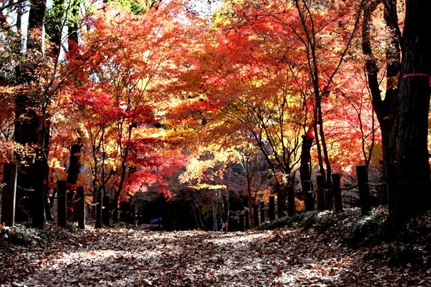 染まる色彩 平林寺紅葉