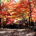 Photos: 染まる色彩 平林寺紅葉