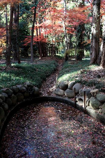 池と紅葉 平林寺