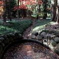 Photos: 池と紅葉 平林寺