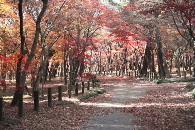 モミジの紅葉の世界2 平林寺
