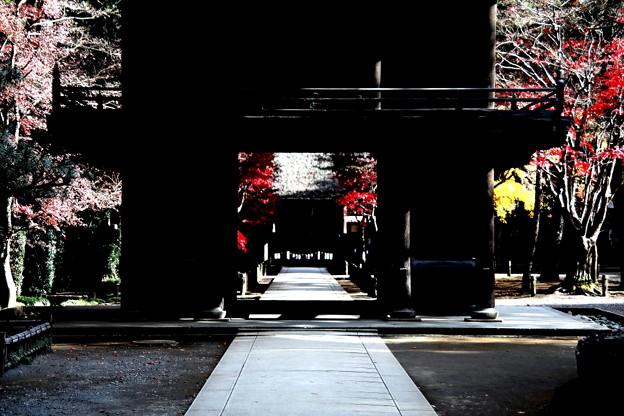 山門の紅葉 平林寺