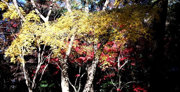 平林寺の紅葉色彩