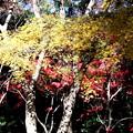 Photos: 平林寺の紅葉色彩