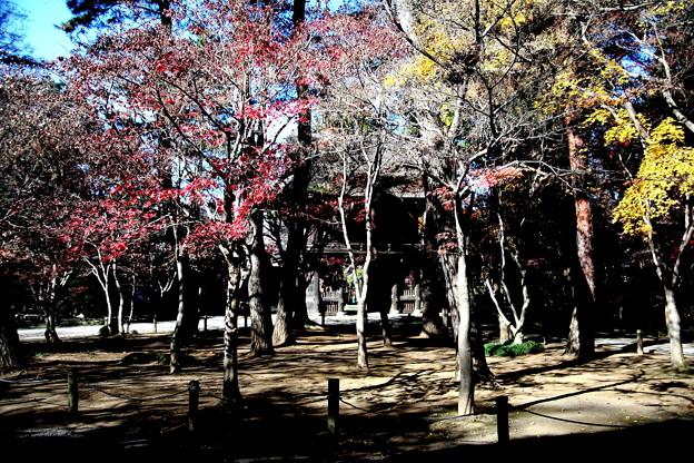 山門を背景の紅葉 平林寺