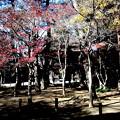Photos: 山門を背景の紅葉 平林寺