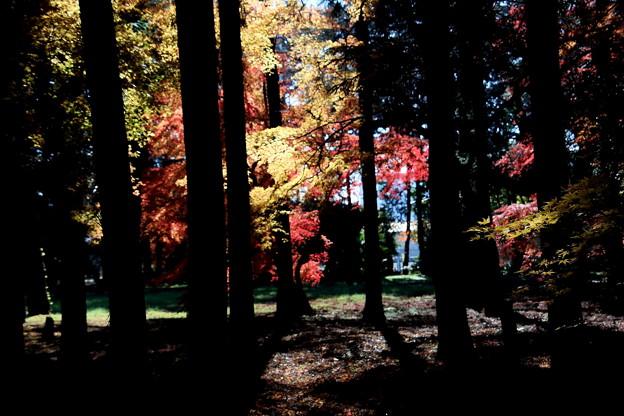 木々の黒と紅葉の色彩