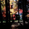 Photos: 木々の黒と紅葉の色彩