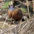 Photos: 綺麗な鳥 コジュウケイ