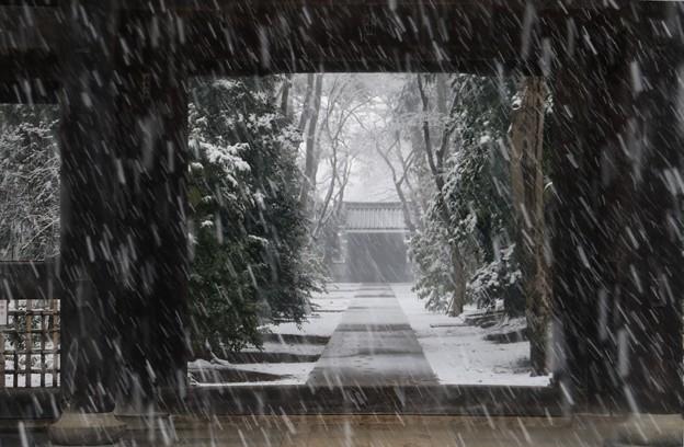 多門院 降る雪