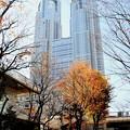 Photos: 元日の都庁