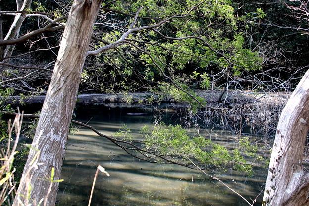 青葉のある池