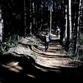 Photos: 多峰主山より下山の山道