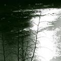 写真: 川面