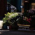 写真: 花の街角