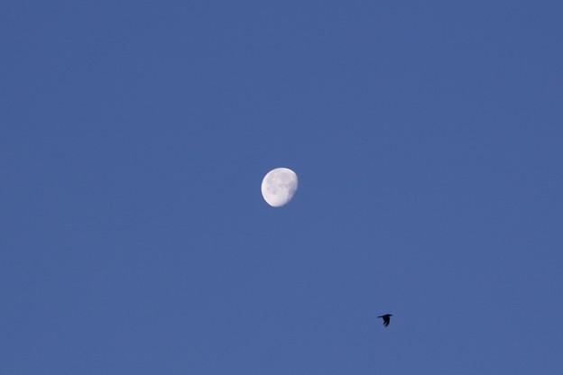 写真: 月丸写真