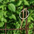 写真: ゆるやかな結合