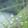 写真: 土手の花