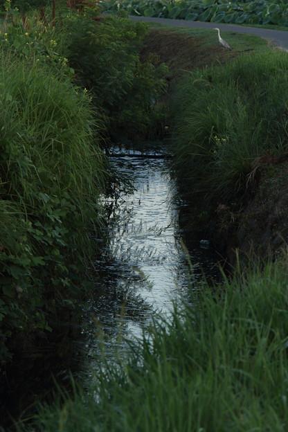 Photos: 用水路