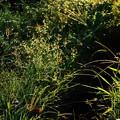 写真: 賑やかな叢