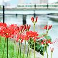 写真: 川辺