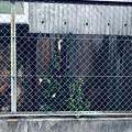 写真: 常緑広葉樹