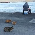 Photos: 魚待ち