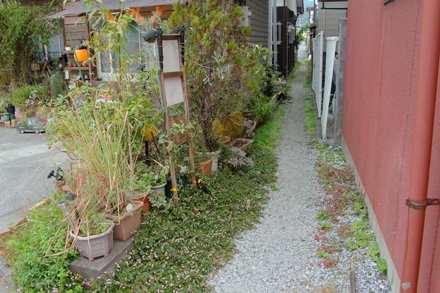 宇和島8-花の小道