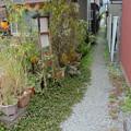 Photos: 宇和島8-花の小道