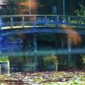 ふくおか15-モネの橋