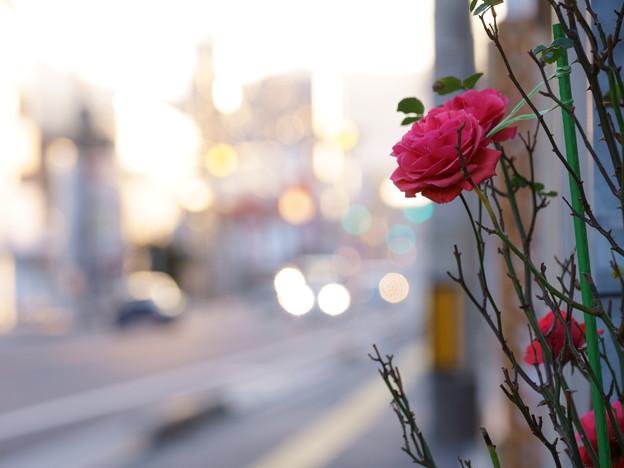 たまには花を