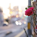 Photos: たまには花を