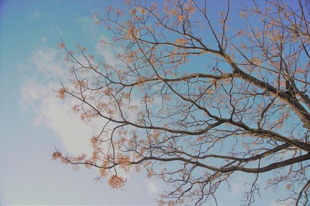 写真: 枝